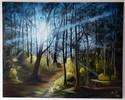 Licht, Natur, Sonne, Wald