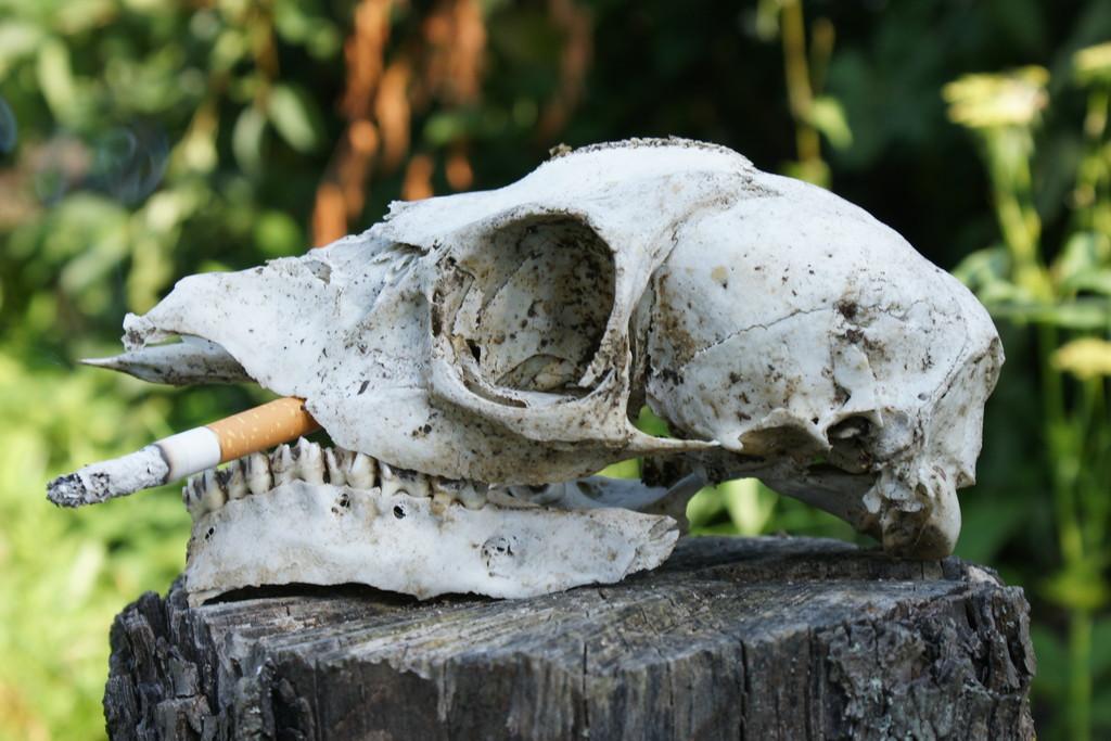 Kunstnet werke fotografie stillleben rauchen schadet irgendwie