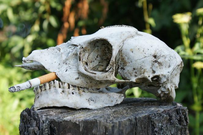 Tod, Lunge, Rauchen, Zigarette, Krebs, Gesundheit