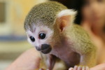 Pippi langstrumpf, Politik, Affe, Tiere
