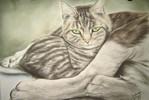 Katze, Katzenzeichnung, Zeichnungen, Tiere