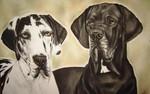 Hundezeichung, Deutsch, Rassehund, Dogge