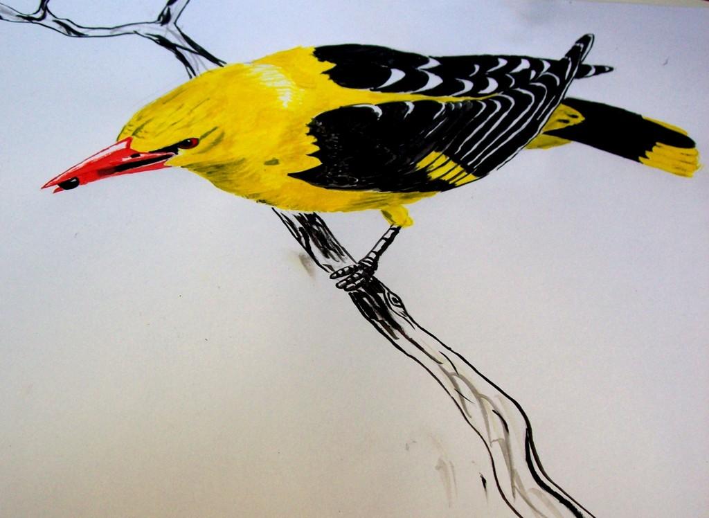 Bild pirol fliegen gelb natur von sammy bei kunstnet for Gelb karten gegen fliegen