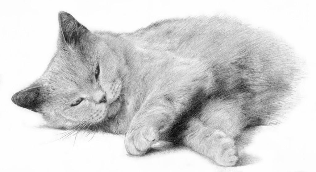 Katze - 2.100 Bilder und Ideen auf KunstNet   Tiere, Pastellmalerei ...