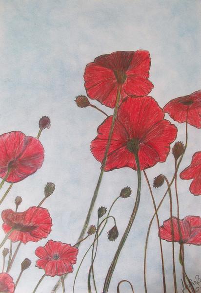 Mohn, Mohnblumen, Blumen, Zeichnungen, Pflanzen