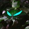 Sommer, Libelle, Deutschland, Natur