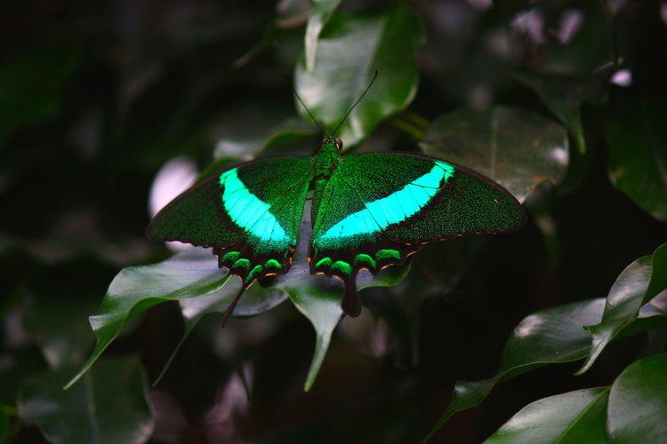 Blüte, Tiere, Naturschutz, Pflanzen, Schmetterling, Deutschland
