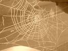 Natur, Spinne, Fotografie, Stillleben