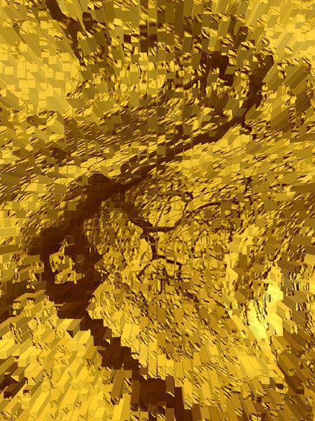Baum, Natur, Fotografie