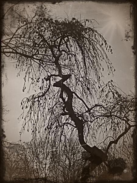 Natur, Geschichte, Zeit, Fotografie