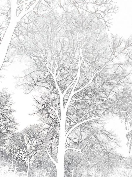 Jahreszeiten, Natur, Fotografie