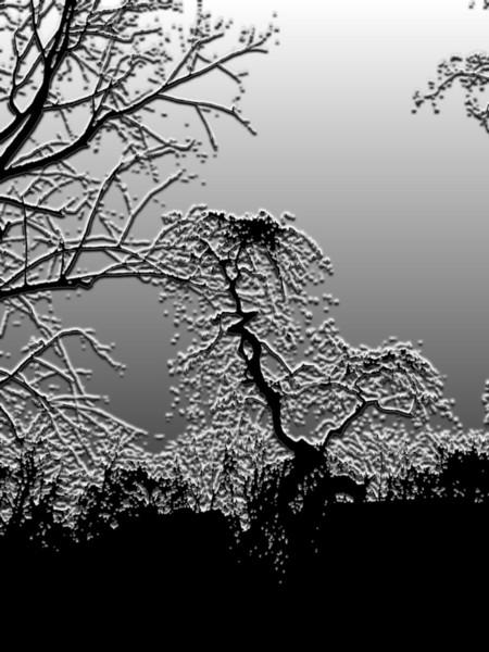 Park, Natur, Baum, Fotografie, Pflanzen