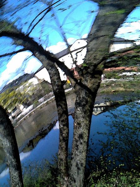 Fluss, Natur, Baum, Fotografie