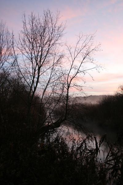 Sonnenaufgang, Strauch, Früh, Wasser, Nebel, Fotografie