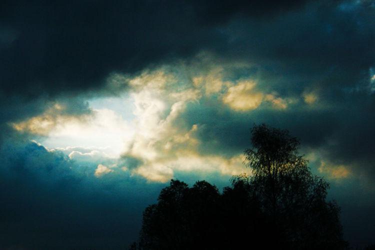 Himmel, Holz, Kühl, Licht, Schatten, Baum