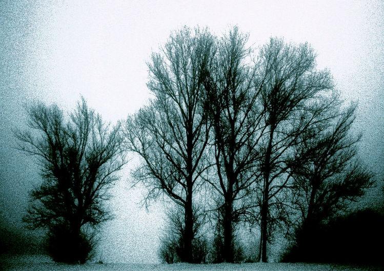 Himmel, Strauch, Nebel, Schnee, Wind, Baum