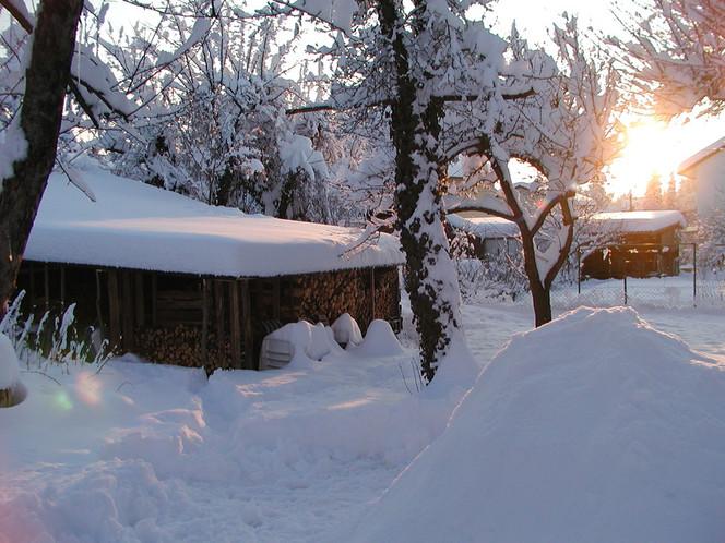 Kälte, Licht, Schnee, Baum, Holz, Fotografie