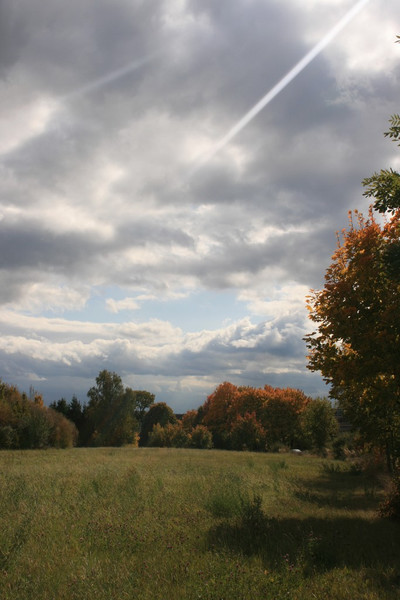 Wiese, Wolken, Baum, Fotografie, Herbst