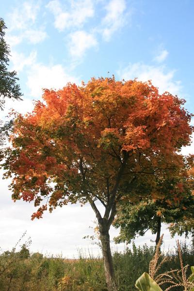 Himmel, Baum, Feld, Fotografie, Herbst