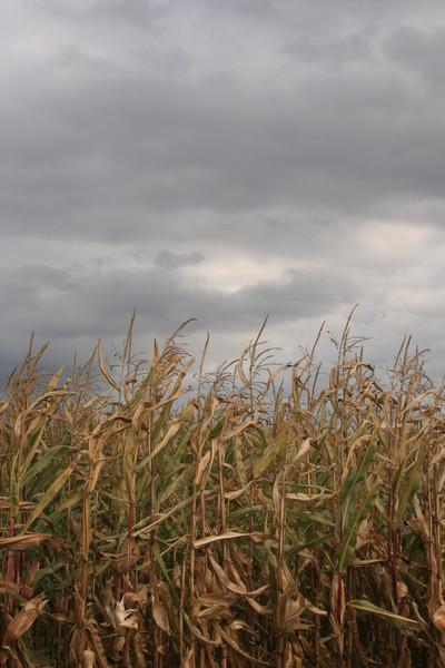 Mais, Wolken, Fotografie