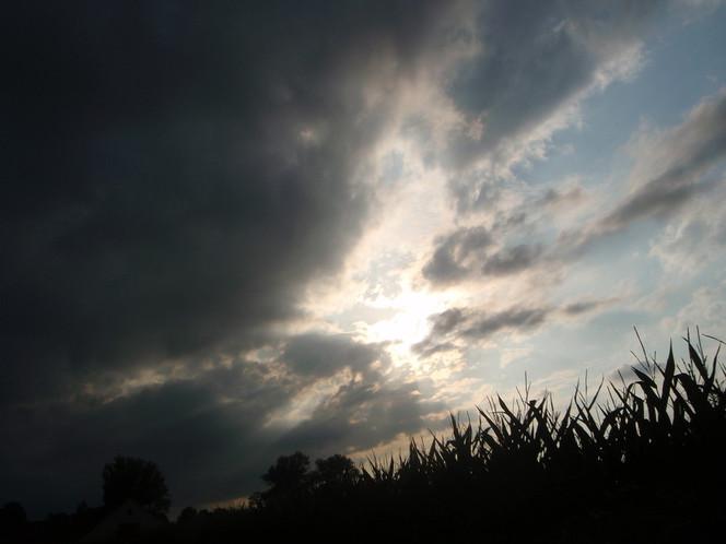 Wolken, Himmel, Licht, Baum, Mais, Fotografie