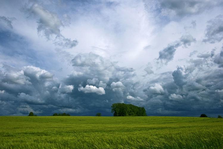 Licht, Baum, Wolken, Himmel, Sonne, Horizont