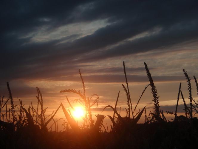 Sonne, Wolken, Himmel, Mais, Fotografie, Licht