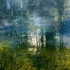 Energie, Baum, Wolken, Mais