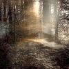Licht, Erde, Äste, Nebel