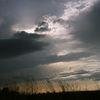 Pflanzen, Wolken, Himmel, Gras