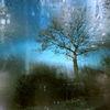 Schatten, Wasser, Stamm, Baum