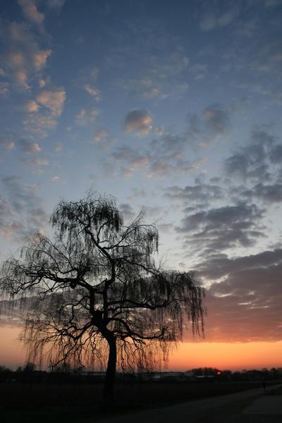 Himmel, Birken, Licht, Wolken, Fotografie, 2009