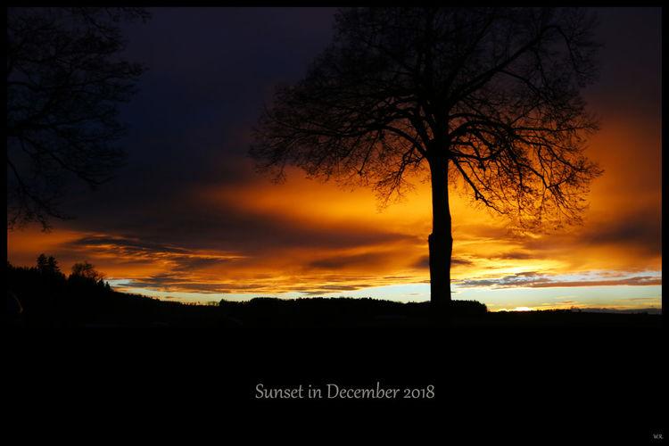 Acker, Baum, Himmel, Schatten, Stamm, Sonnenuntergang