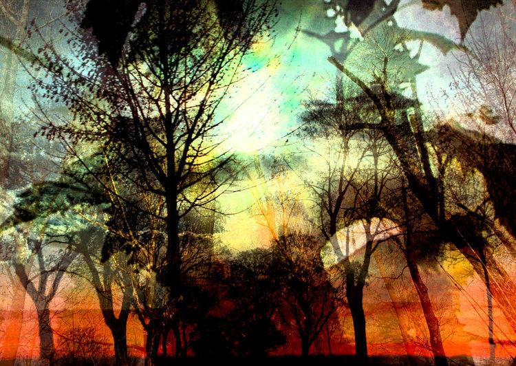 Äste, Licht, Zweig, Sonne, Himmel, Holz