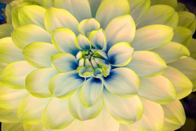 Blumen, Gelb, Natur, Fotografie, Stillleben
