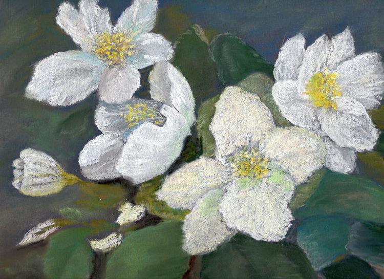 Blüte, Lenzrosen, Pastellmalerei, Winter, Blumen, Christrosen