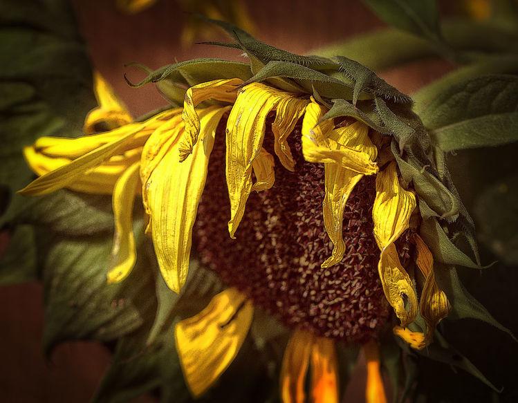 Filter, Sonne, Herbst, Makro, Verwelken, Gelb