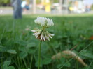 Blumen, Wiese, Gras, Hummel