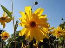 Gelb, Natur, Blumen, Himmel