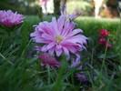Violett, Hübsch, Blumen, Makro