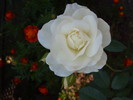 Weiß, Blumen, Fröhlichkeit, Hübsch