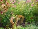 Schwemmholz, Blumen, Gartengestaltung, Holz