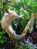 Gartengestaltung, Holz, Schwemmholz, Blumen