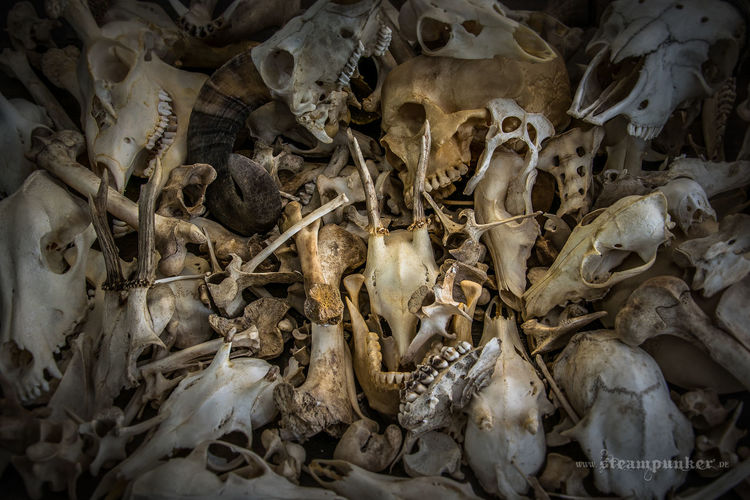 Schädel, Vergänglichkeit, Tod, Bones, Horn, Vanitas