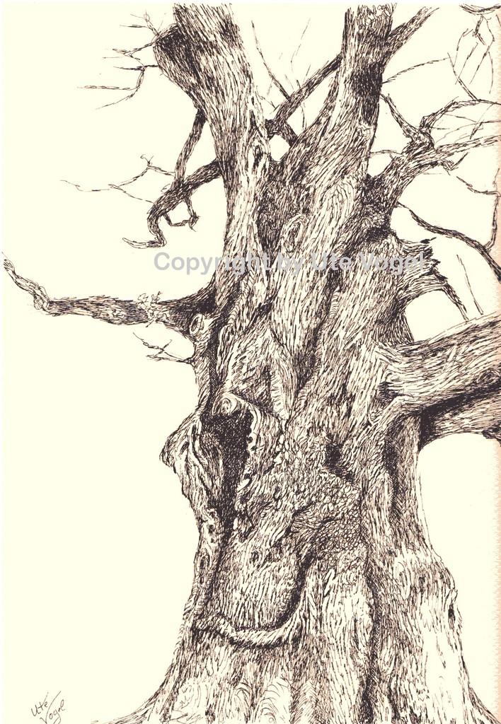 Kunstnet werke zeichnungen tiere alter baum auf rügen