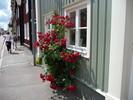 Schweden, Holzhäuser, Kalmar, Rose