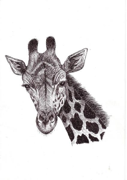 Zeichnungen, Tiere, Giraffe
