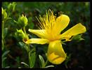 Blumen, Fotografie, Schwarz, Grün