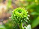 Blüte, Fotografie, Grün, Blumen