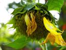 Blumen, Fotografie, Herbst, Sonnenblumen
